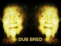 dub bred