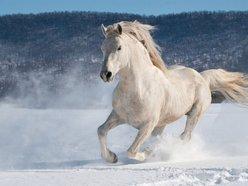 snowhorse