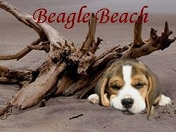 Image for Beagle Beach