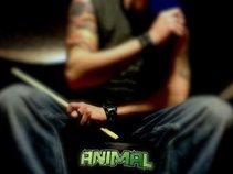Adam Animal Drumz