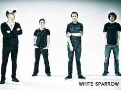 Image for White Sparrow