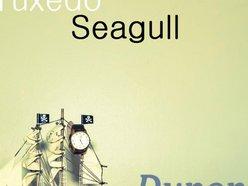 Tuxedo Seagull