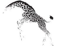 The Giraffes
