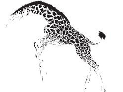 Image for The Giraffes