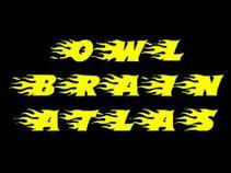 OWL BRAIN ATLAS