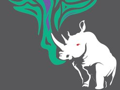 Image for Albino Rhino