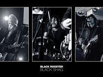 Black Rooster Black Shag