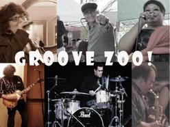 Image for Groove  Zoo