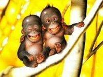 2 Sick Monkeys