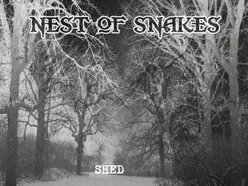 Image for Nest of Snakes