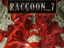 Raccoon_7