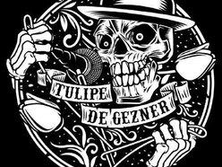 Image for Tulipe De Gezner