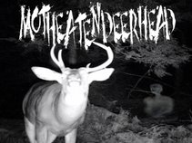 Moth-Eaten Deer Head