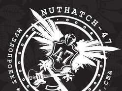 Image for NUTHATCH-47