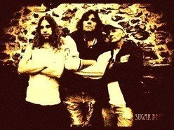 Image for Sugar Bear Trio