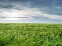 Bent Grass Theory