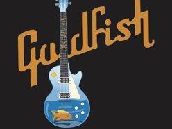 Image for goldfish