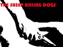 THE SHEEP kILLING DOGS