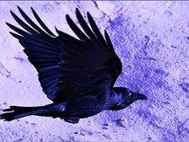 Josh Shipton and the Blue Eyed Ravens
