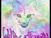 Wildcat Enigma
