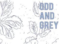 Image for Odd & Grey