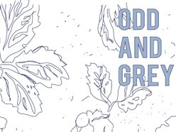 Image for Odd & Grey