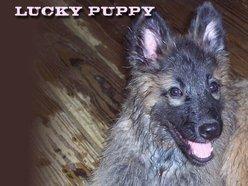 Scott Boggs Lucky Puppy Reverbnation