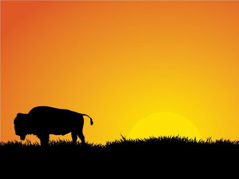 Image for Romen Buffalo