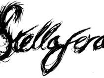 Stellafera
