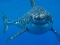 Shark Patrol