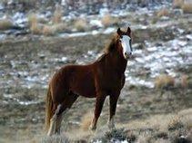 Johnny Mustang
