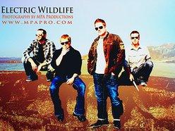 Electric Wildlife
