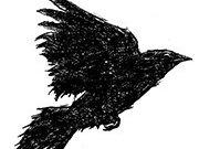 blackbird mission