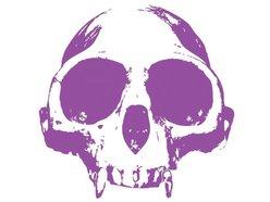 Image for Purple Monkey Sircus