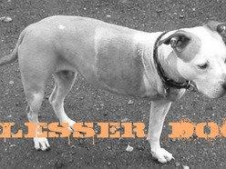 Image for LESSER DOG