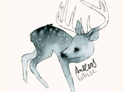 Image for Antlers White