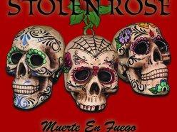 Image for STOLEN ROSE