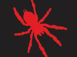 Image for Spider Gods