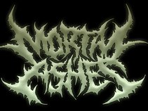 Mortal Ashes