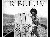 Tribulum