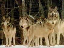 Wolf Ent Reno