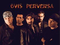 OVIS PERVERSA