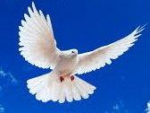 Dodging Dove