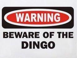 The Dingo Kings