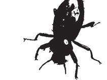 Big Black Bugs