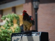 Rooster Funk