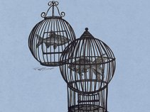 Fish In A Birdcage
