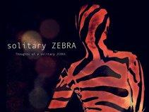 solitary ZEBRA