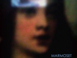 Image for Marmoset