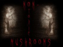 non-toxic mushrooms